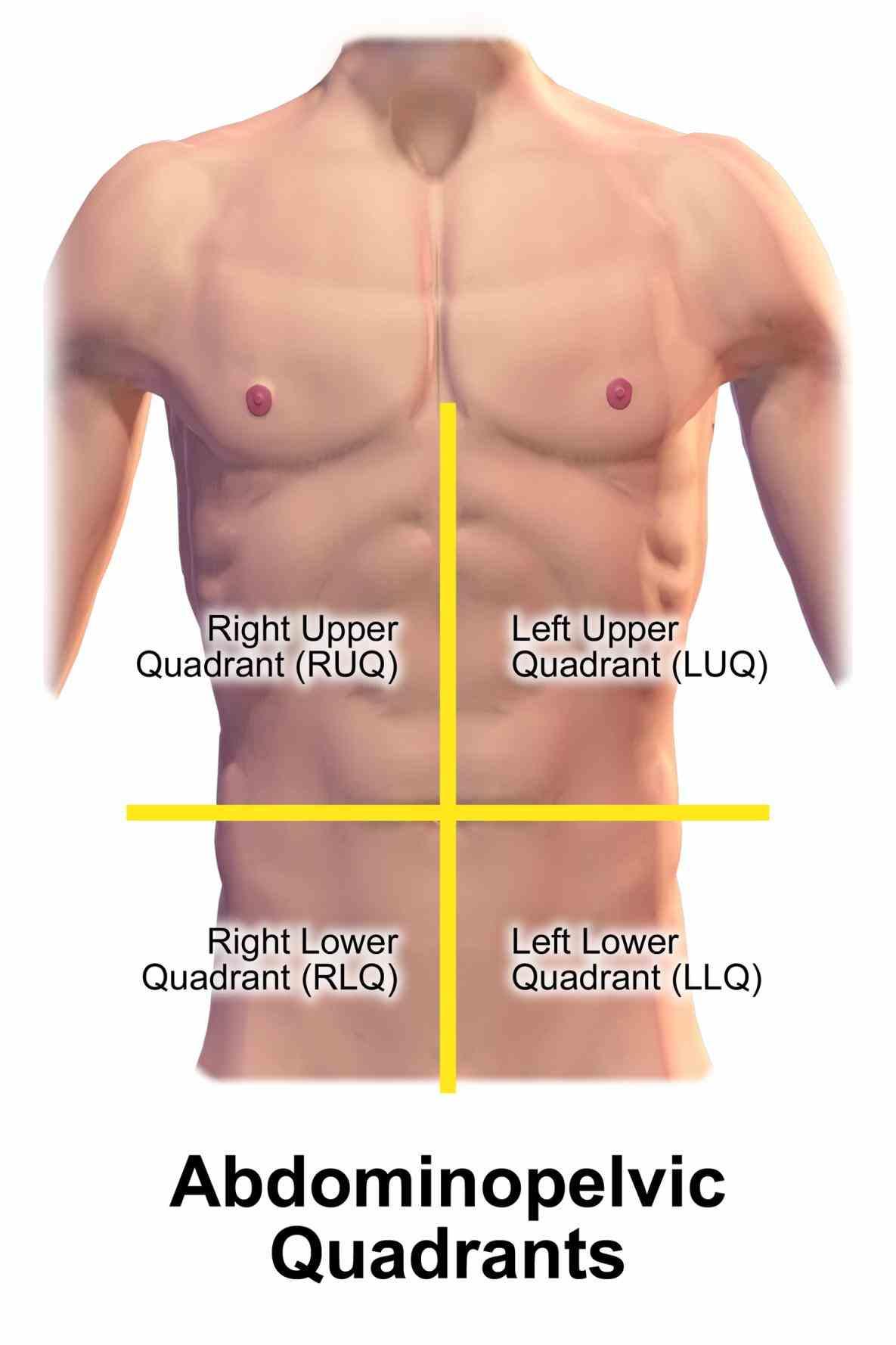 Picture Of Abdominal Quadrants
