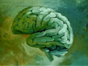 A painted illustration of a human brain seen from the side.