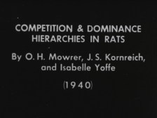 Competition & Dominance Hierarchies in Rats