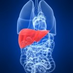 Liver Disease Associated With Higher Stroke Risk