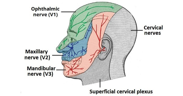 OPHTHALMIC (V1) NERVE