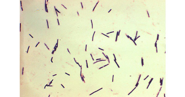Clostridium Perfringens: Clinical manifestation, Diagnosis and Treatment
