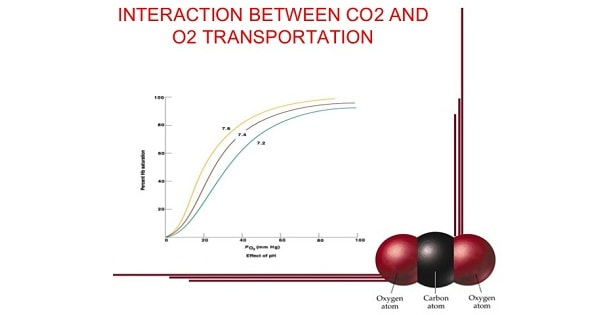 Interaction Between Co2 & O2 Transport