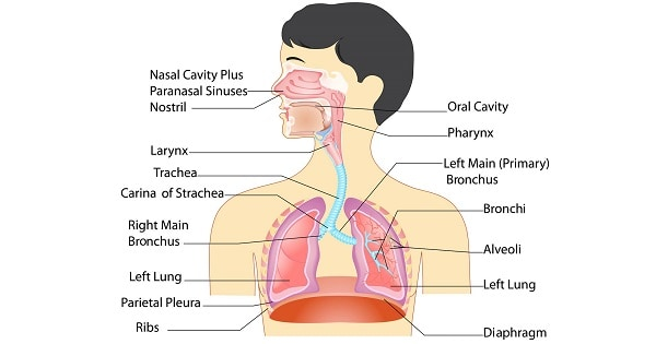 Respiratory Reflexes