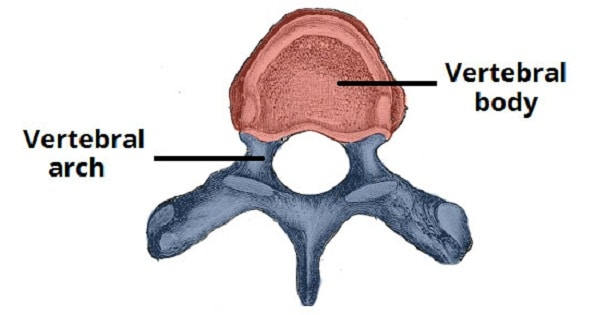 Important Joints Of Vertebral Column - www.medicoapps.org