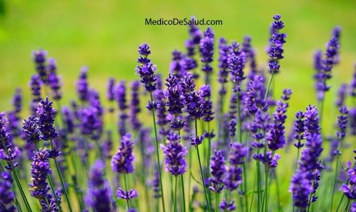 10 Beneficios de aceite de lavanda para enfermedades importantes y dolencias menores