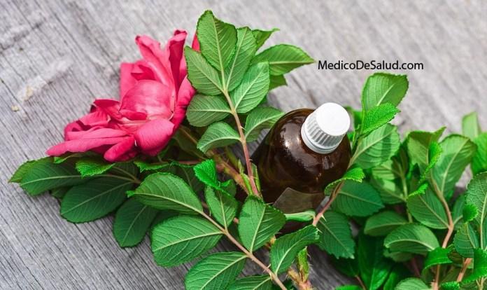 Aceite esencialderosa aceites esenciales: guia de propiedades, listado, aromaterapia Aceites Esenciales: Guia de Propiedades, Listado, Aromaterapia Screenshot 36