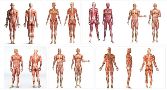 Espasmos musculares: Diagnostico, Síntomas y Tratamiento