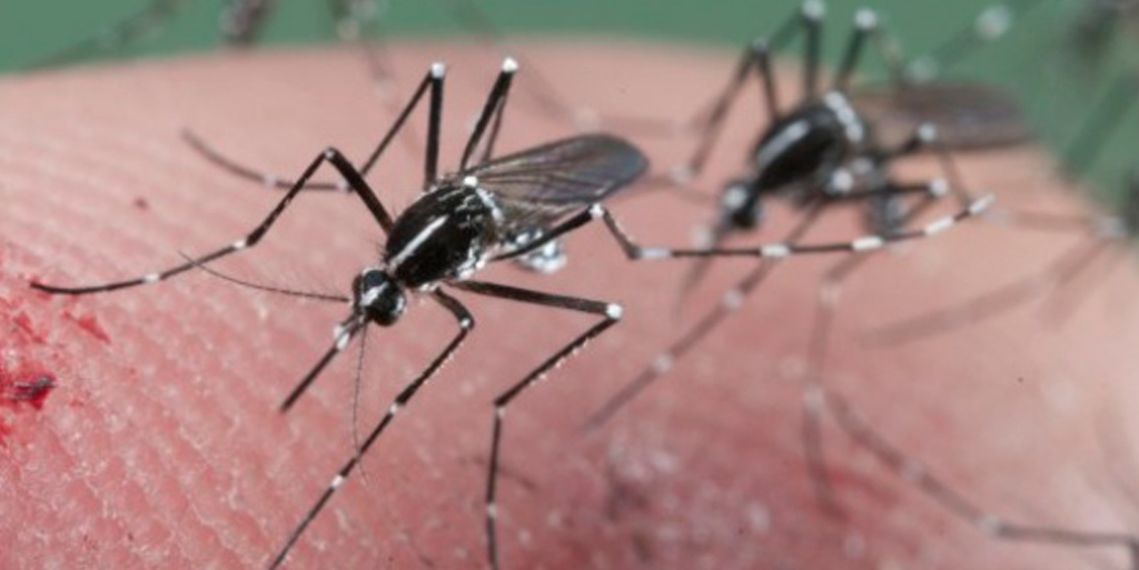 Las claves del virus Zika