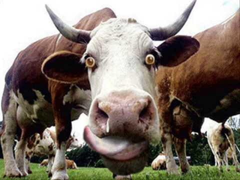 Enfermedad de las vacas locas: