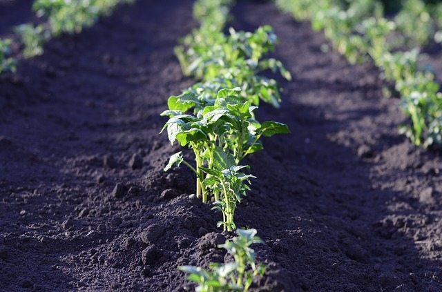 3 dicas para manter sua horta saudável sem apelar a produtos químicos