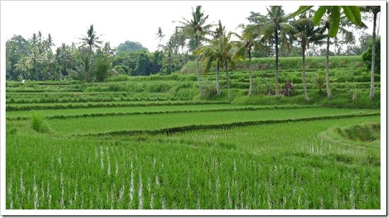2011-03-22 Bali 042