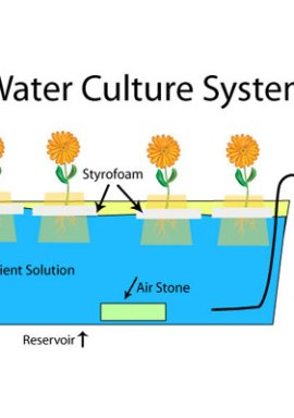 Water Culture System