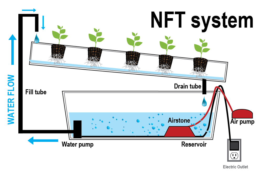 Nutrient File Technique