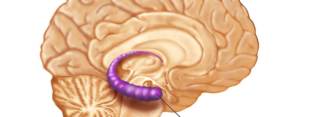 Medical Illustrations Laura Maaske Medical Illustrator Biological