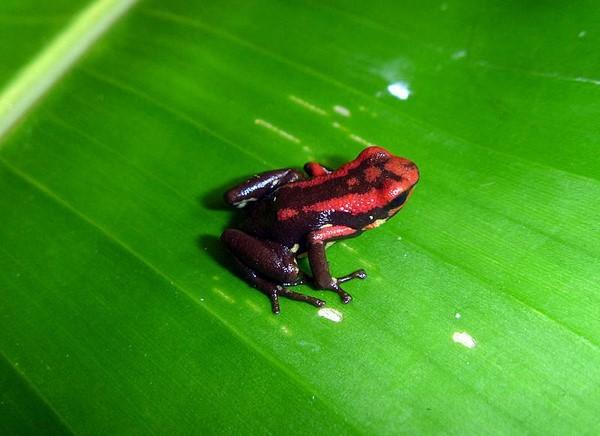 Qué es la Lista Roja de la UICN b