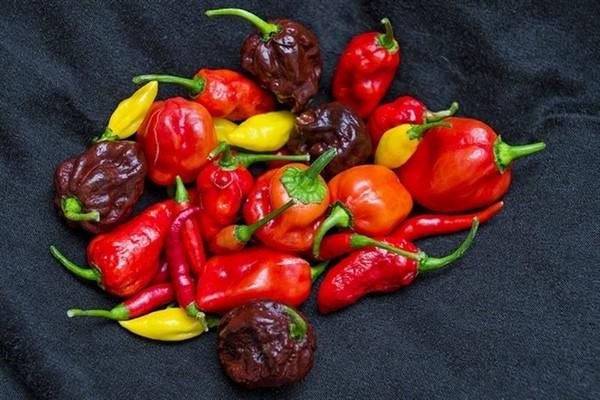 Cómo plantar pimientos picantes, de cayena o chiles. Ficha completa c