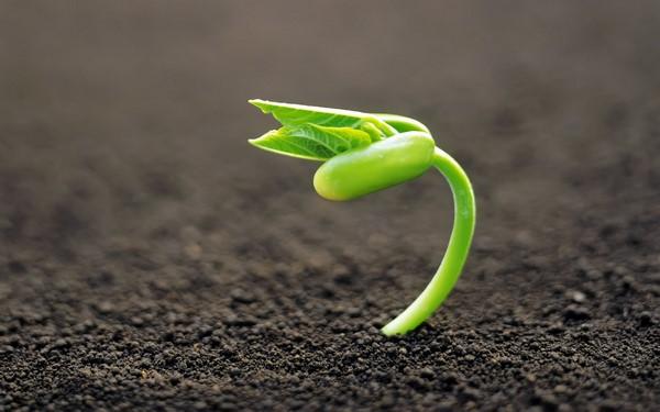 Os apuntáis a compartir y donar semillas B