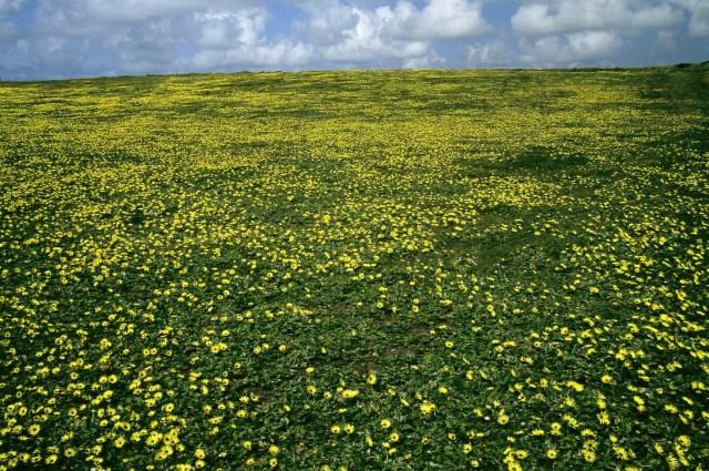 Fondos de pantalla de flora y vegetación ah