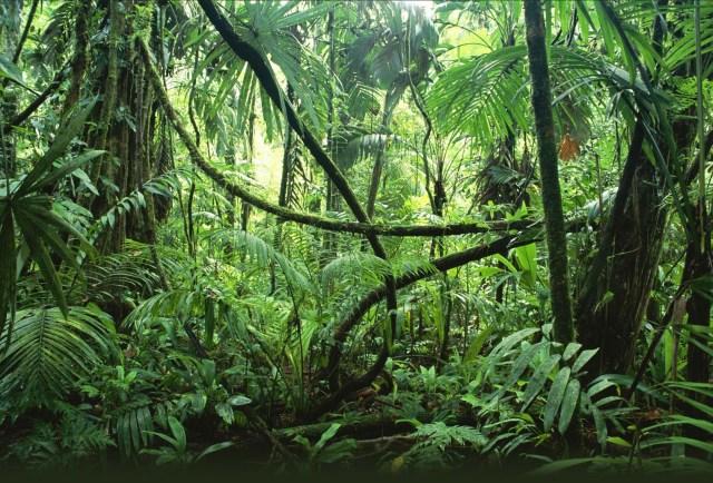Fondos de pantalla de flora y vegetación bd