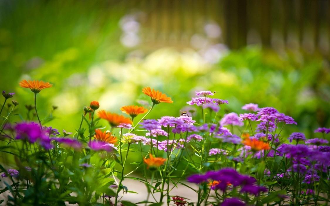 Fondos de pantalla de jardinería am