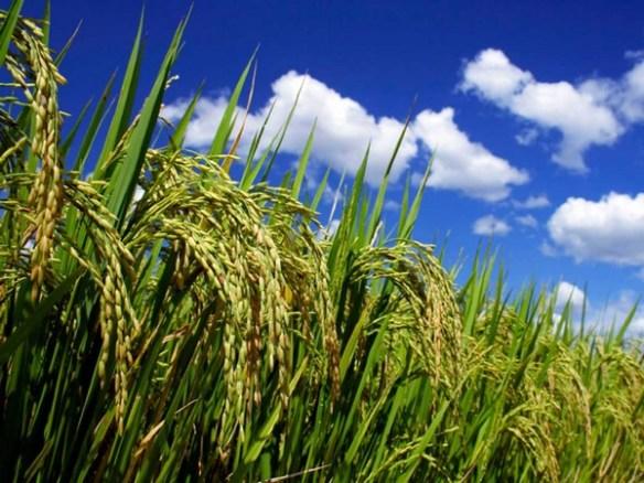 Qué son las semillas ecológicas b