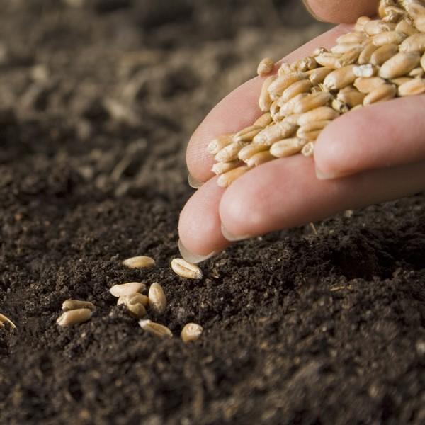Qué son las semillas ecológicas