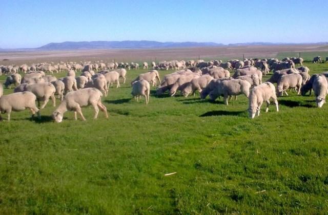 Todos los tipos de ganadería en base a la forma de explotación