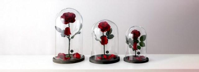 Las flores liofilizadas - Características, cómo fabricarlas y cuidados