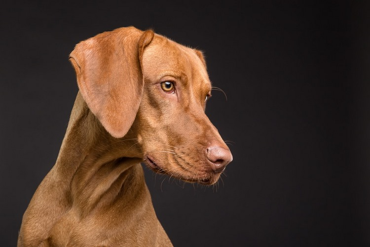 La comida personalizada, lo último en alimentación equilibrada para perros