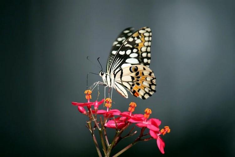 Aprende más sobre la flora y la fauna