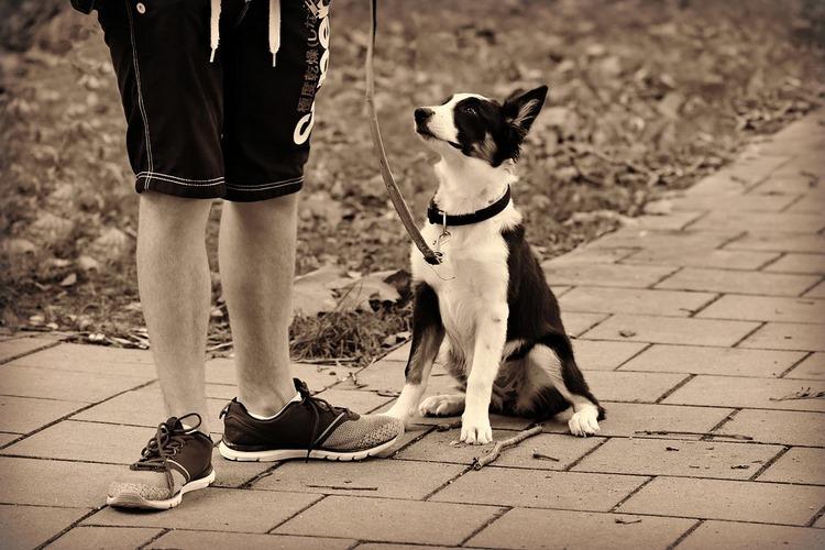 Consejos para no contagiarte con coronavirus al pasear al perro