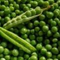 Empresa agrícola especializada en guisantes
