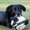 Consejos para sacar a pasear al perro y socializarlo