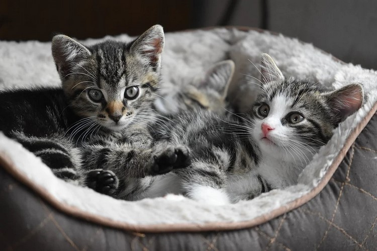 Juguetes para entretener a los gatos