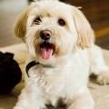 Consejos de estética canina para tu compañero