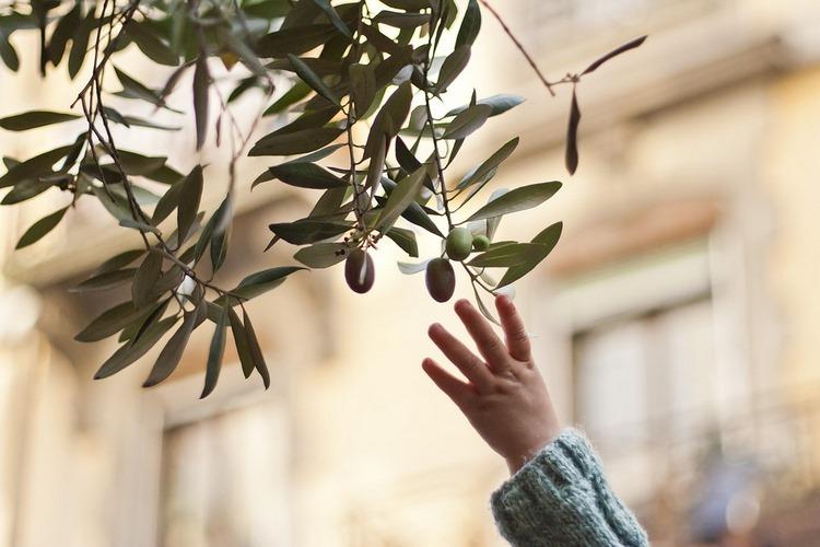 Adopta un Olivo, el proyecto sostenible español más ecológico