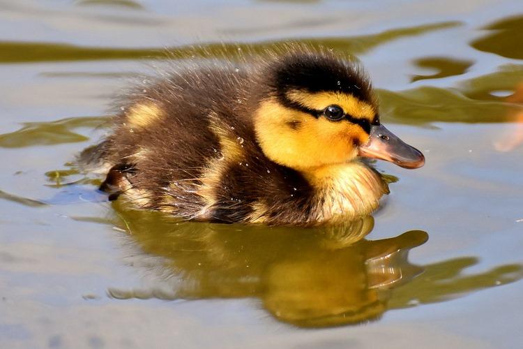 11 consejos antes de adoptar un ave