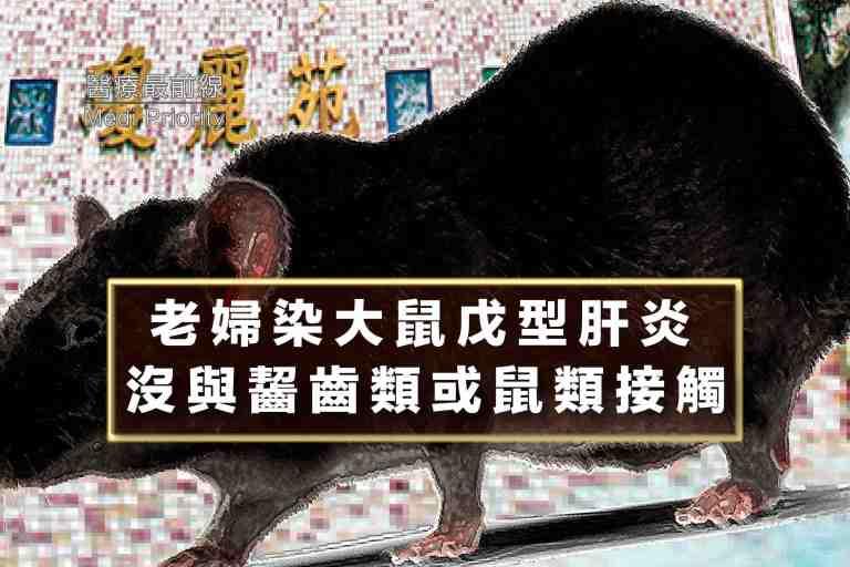 【老婦染大鼠戊型肝炎】 沒與齧齒類或鼠類接觸