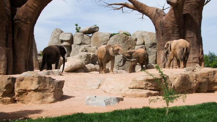 معلومات حول حديقة حيوانات ديترويت وحيواناتها