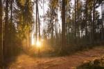 Pon un bosque en tu vida
