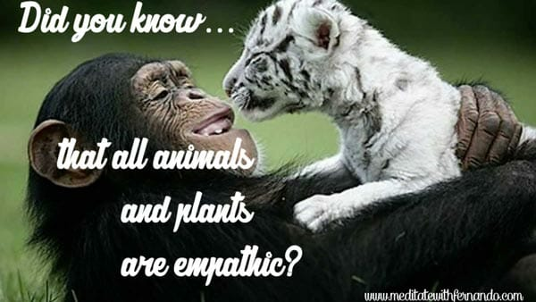 Animals are empaths. (Did you know 2017)