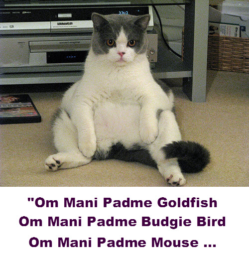 Cat meditation techniques