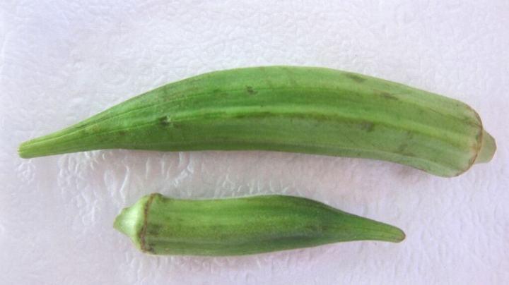 Pick the smaller okras, always!