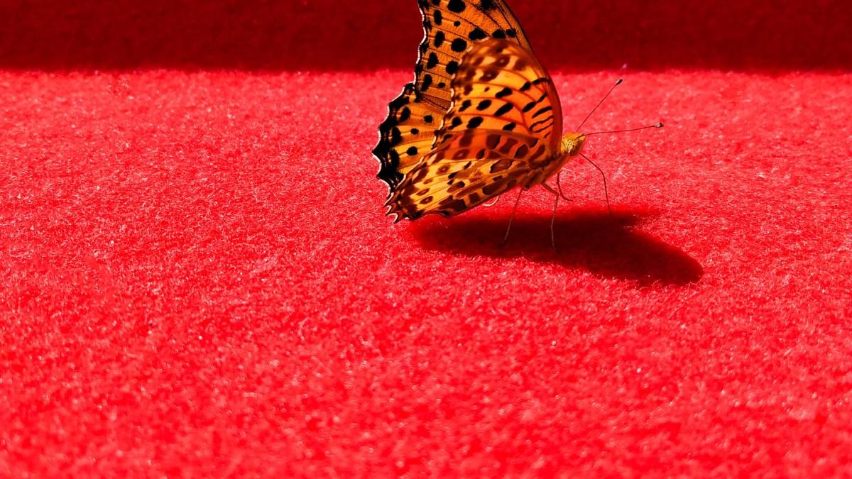 Los oscar y la alfombra roja