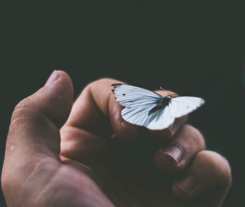Embrace The Butterflies