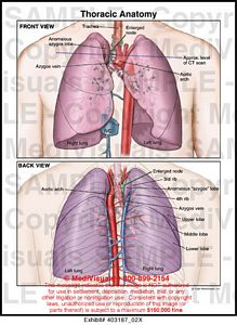 Medivisuals Thoracic Anatomy Medical Illustration