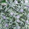 Umjetna kugla Provence