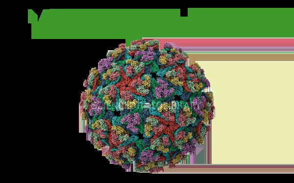 Virus Encephalitis (Western Equine Encephalitis, Eastern Equine Encephalitis, dan Venezuelan Equine Encephalitis)