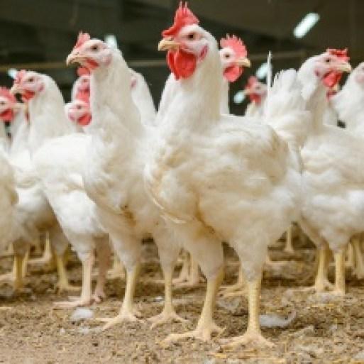 Bird Flu | Influenza A | Avian Flu | MedlinePlus